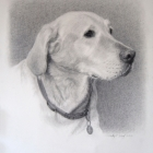 Calhoun, charcoal portrait pet